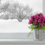 Время считать деньги — окна Рехау вам помогут